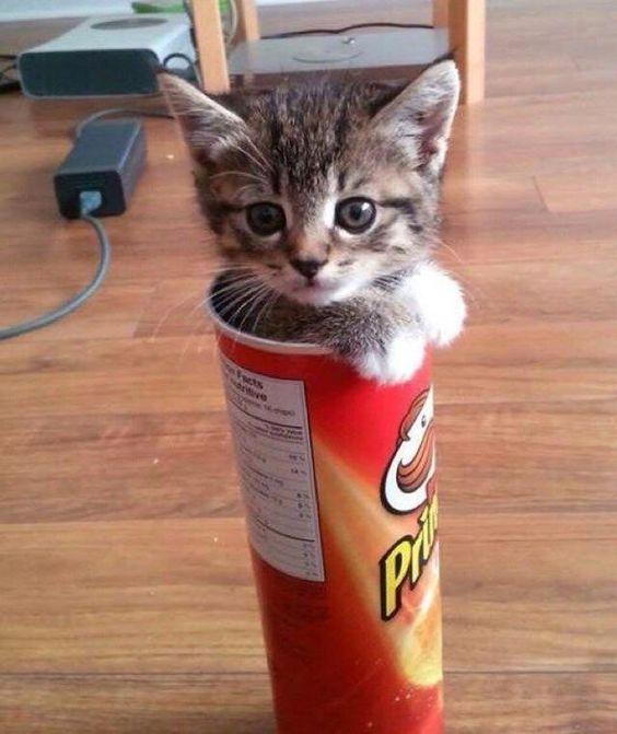 Forever_Kitten_ photo