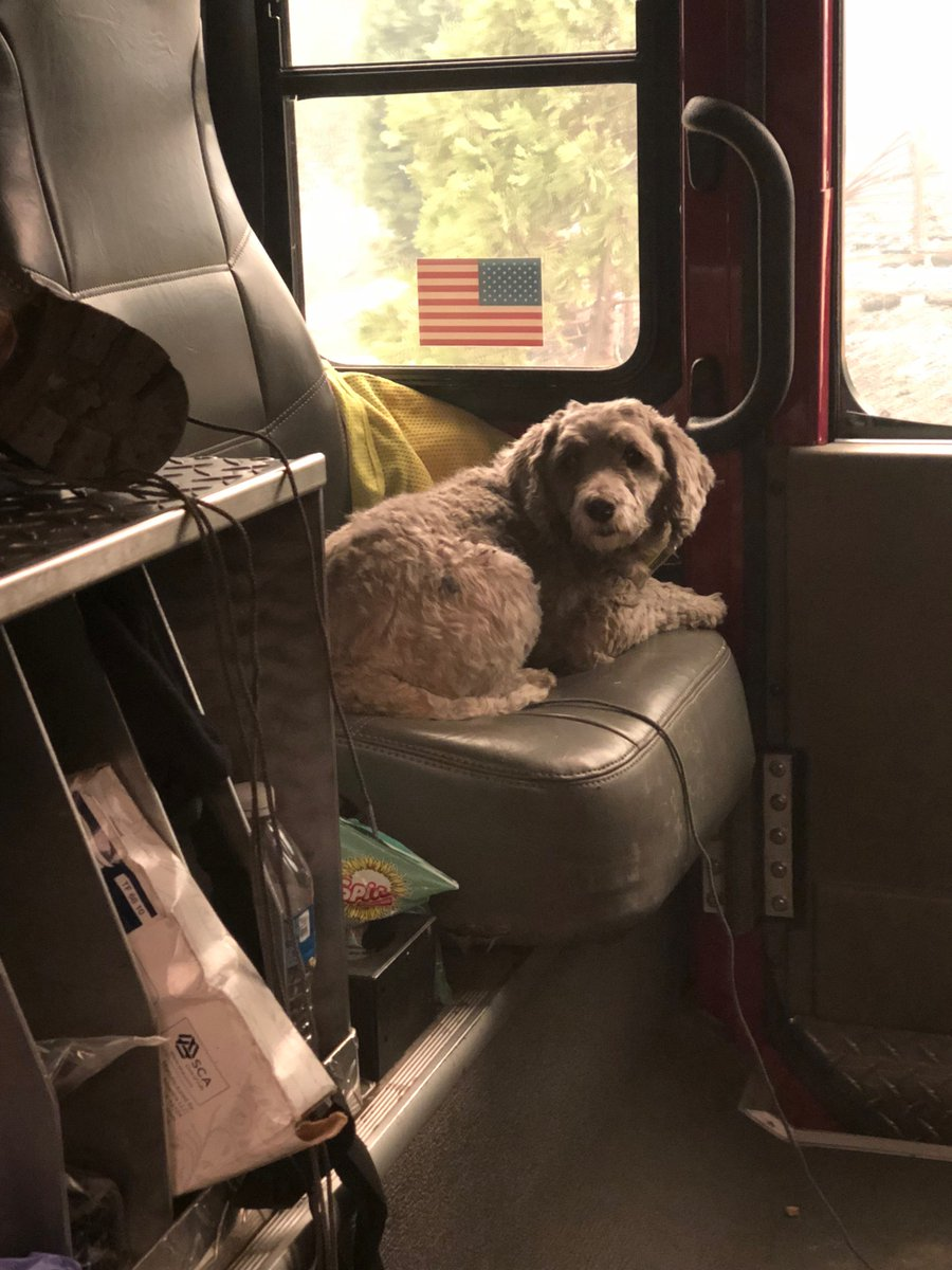 San Mateo City firefighters rescue dog and name him Camp. Looking for his owners, hoping they survived inferno in Paradise. What a face. Photos courtesy San Mateo Fire Battalion Chief Joe Novelli. #ABC7now