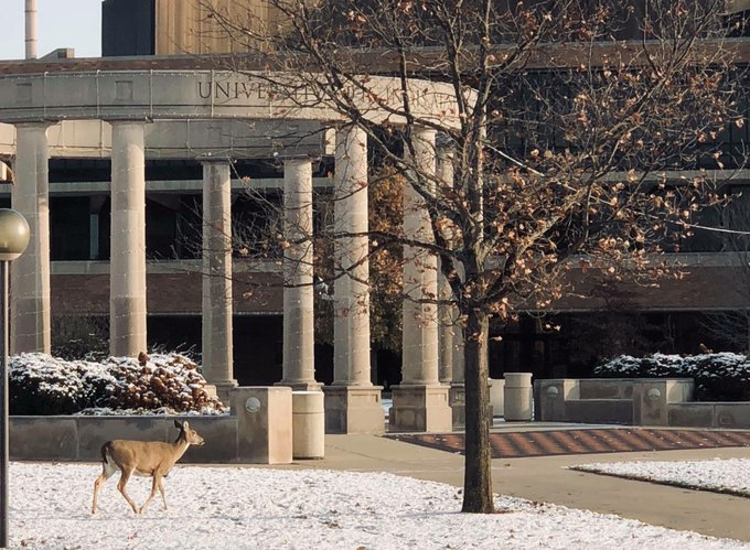 Oh Deer! One of our campus' early commuters enjoying the winter weather this morning on the #UISedu quad! (Photo by Jamie McGill) #deer #Illinois https://t.co/8ytIoRAZZe
