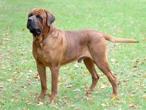 @MIHomeYGK Lost dog! #YGK east end. My brother's dog Cleo broke thru the fence! She's a Tosa- large breed and will be skittish. DM me if you spot her. #lostdog <br>http://pic.twitter.com/seQ761eIN8
