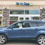 The very cute little Bandit had a special treat thanks to @FordCanada and it looks like he and  @ChattyGirlMedia had a great time driving the Escape!  https://t.co/kl8FMlvKZg #Ford_Partner #FordEscape.