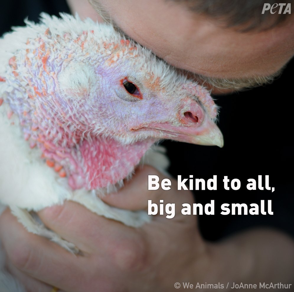 It's so easy to be kind to animals ❤️ #WorldKindnessDay #WorldVeganMonth