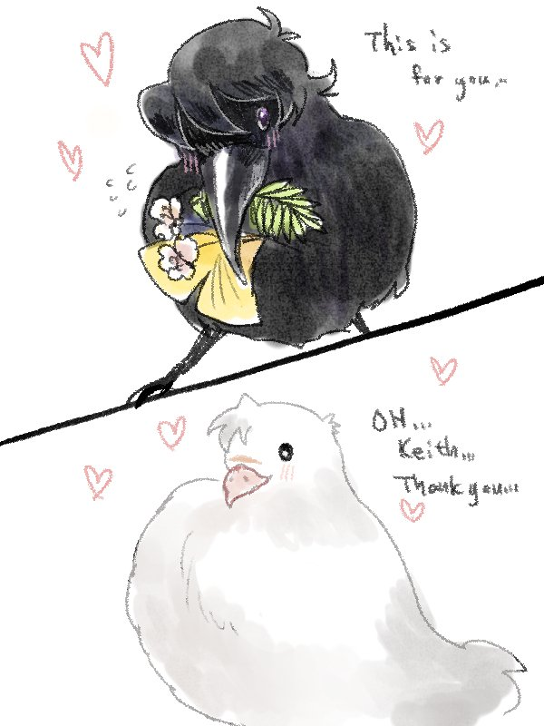 Raven!Keith Pigeon!Shiro  What.......am I doing.... #Sheith<br>http://pic.twitter.com/3NofJZ1Bxu