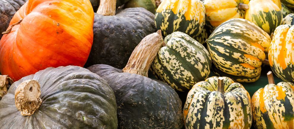 @MotherNatureNet: Rejoice gourd nerds! 'Tis the season of the winter squash. https://t.co/vIDLCgPABh https://t.co/ipZm2JGvCZ