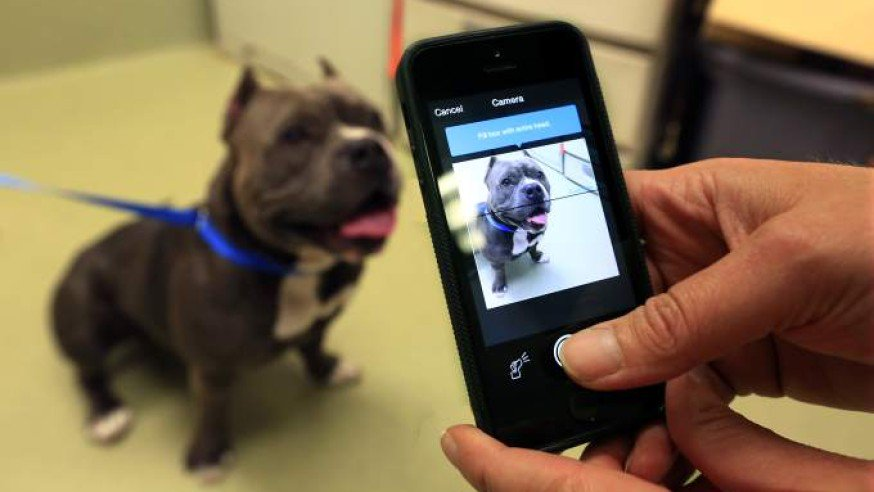 Getting lost #pets back with loved ones in Las #Vegas &amp; #ClarkCounty. The @animalfndlv to start using #facialrecognition to identify lost #dogs and #cats . It&#39;s partnering with @FindingRover, a free mobile app in this great new program.  Learn more at  http://www. findingrover.com  &nbsp;  .<br>http://pic.twitter.com/P32rp8n6w3