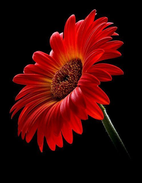 @GEdelDrake @semrasevimli44 @snowleopard56 @FlowerSree @encarnacion67 @gamila2103 @justbeyou432 @FlowerchildRT