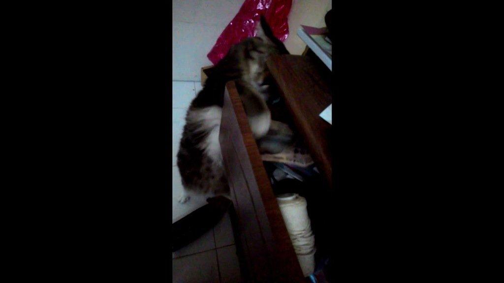 lolol_cat photo