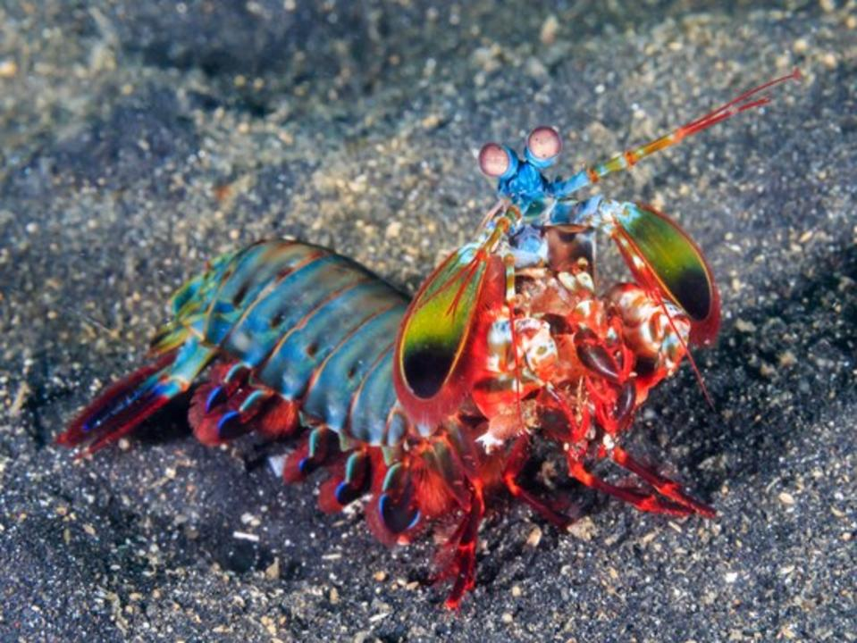 Some animals live peacefully. Others, like this mantis shrimp, prefer to punch you in the face until you die: https://t.co/350iFbIwfN