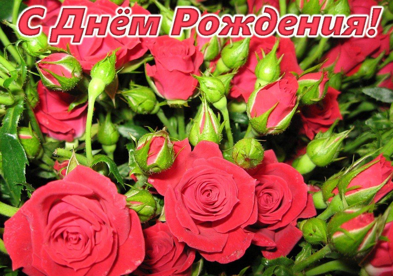 Открытка с розой с днем рождения, спасибо