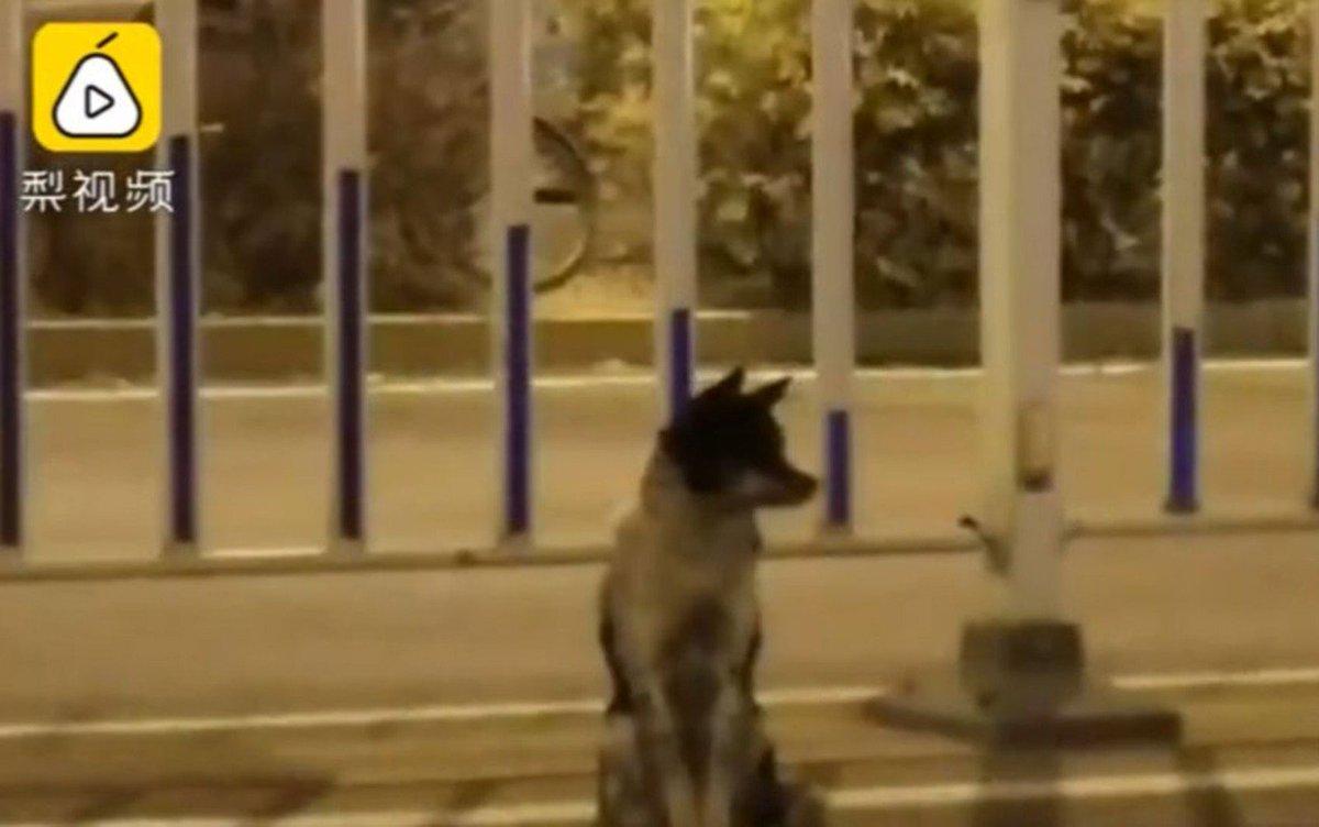 O cão que está há 80 dias em estrada esperando dona que morreu https://t.co/MTbDuFoUVl #G1