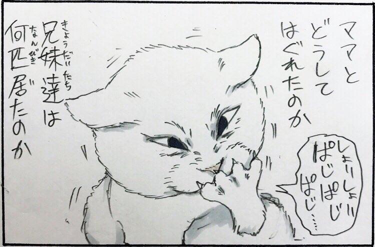 『拾い猫のミルク』