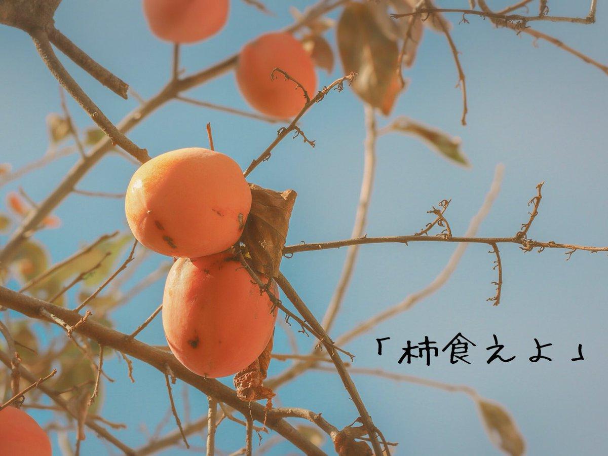 食 鳴る 柿 なり えば 鐘 法隆寺 が