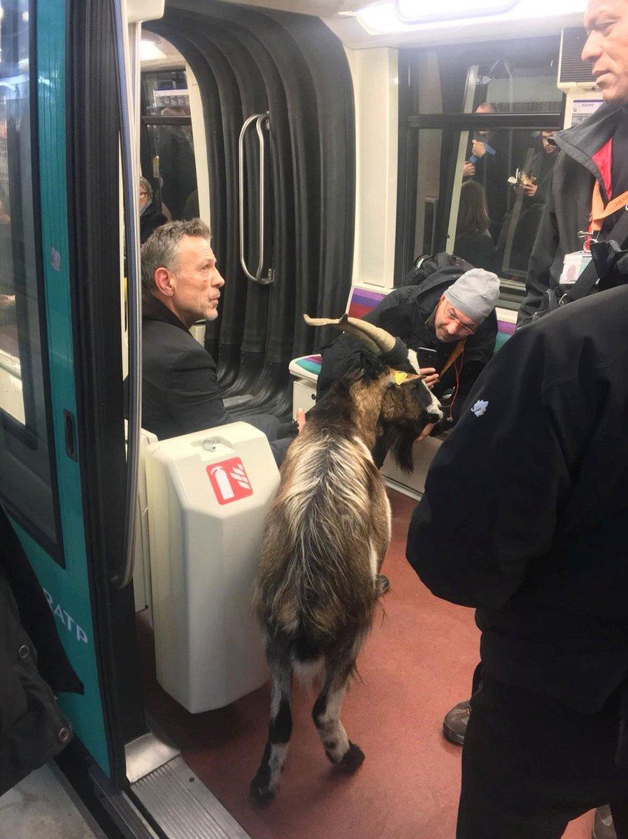 Homem rouba cabra perto do Museu do Louvre e foge pelo metrô de Paris https://t.co/YqtIcSG14C #PlanetaBizarro #G1