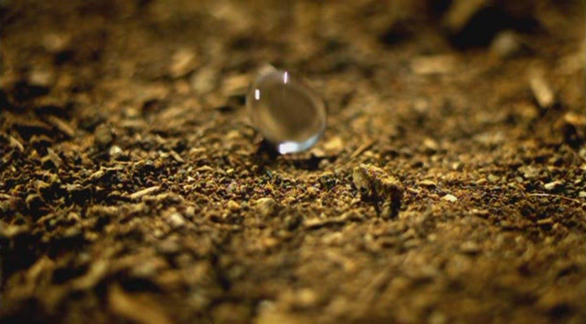 rain drop petrichor