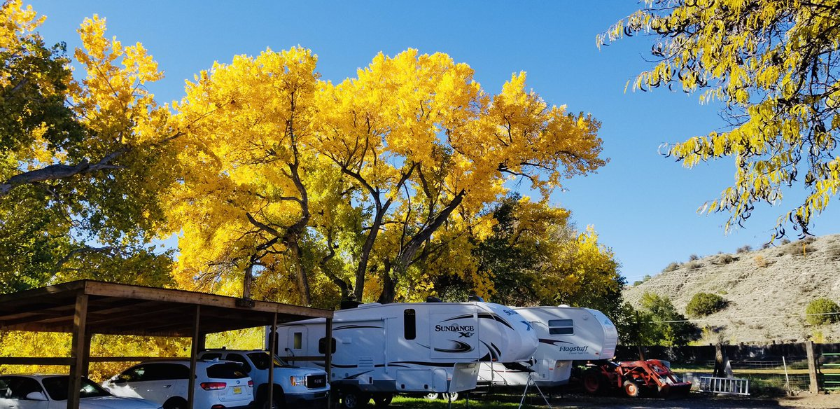 Bright yellows still showing in the Española Valley 🍂   📸: Patricia Valerio @KOB4 #nmwx #NewMexicoTRUE