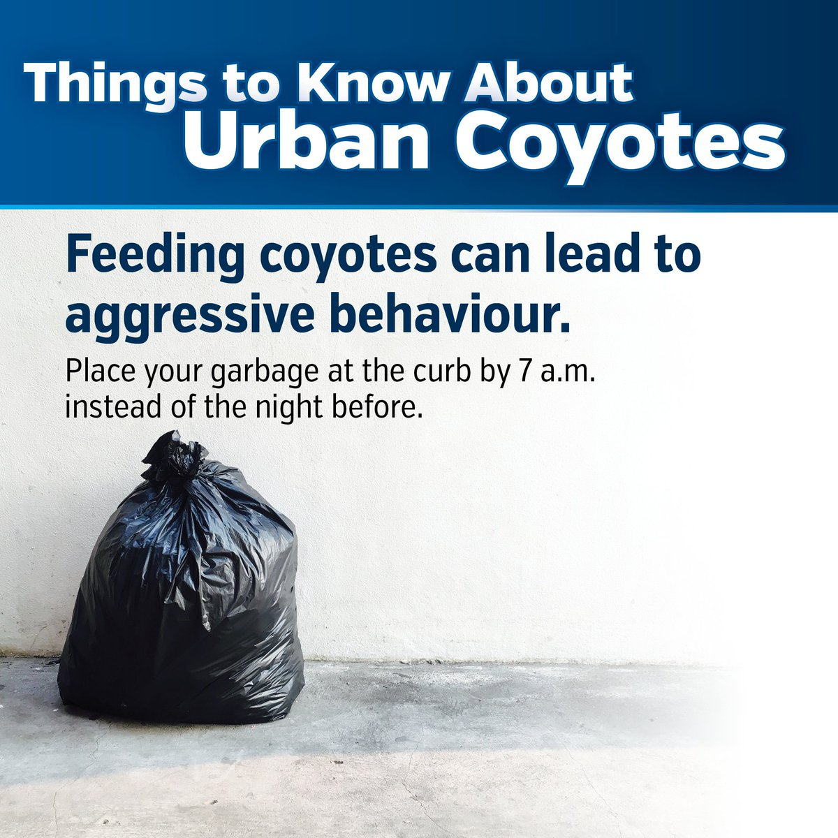 Did you know that feeding coyotes can lead to aggressive behaviour? Be sure to place your garbage at the curb by 7am instead of the night before. Learn more at http://www.burlington.ca/coyotes  #BurlON #LivingWithCoyotes