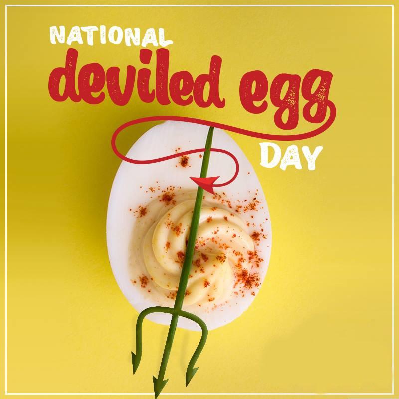 Happy National Egg Day: Latest News, Breaking Headlines