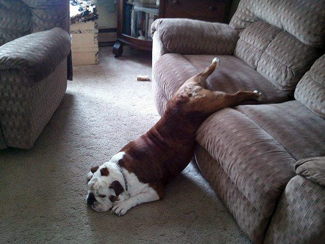 Смешные картинки лежу на диване, мороз открытка