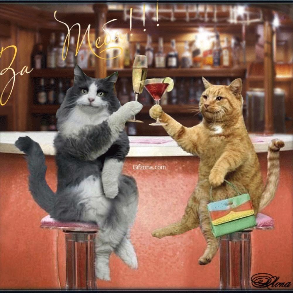Открытки с котами прикольные с надписями на день