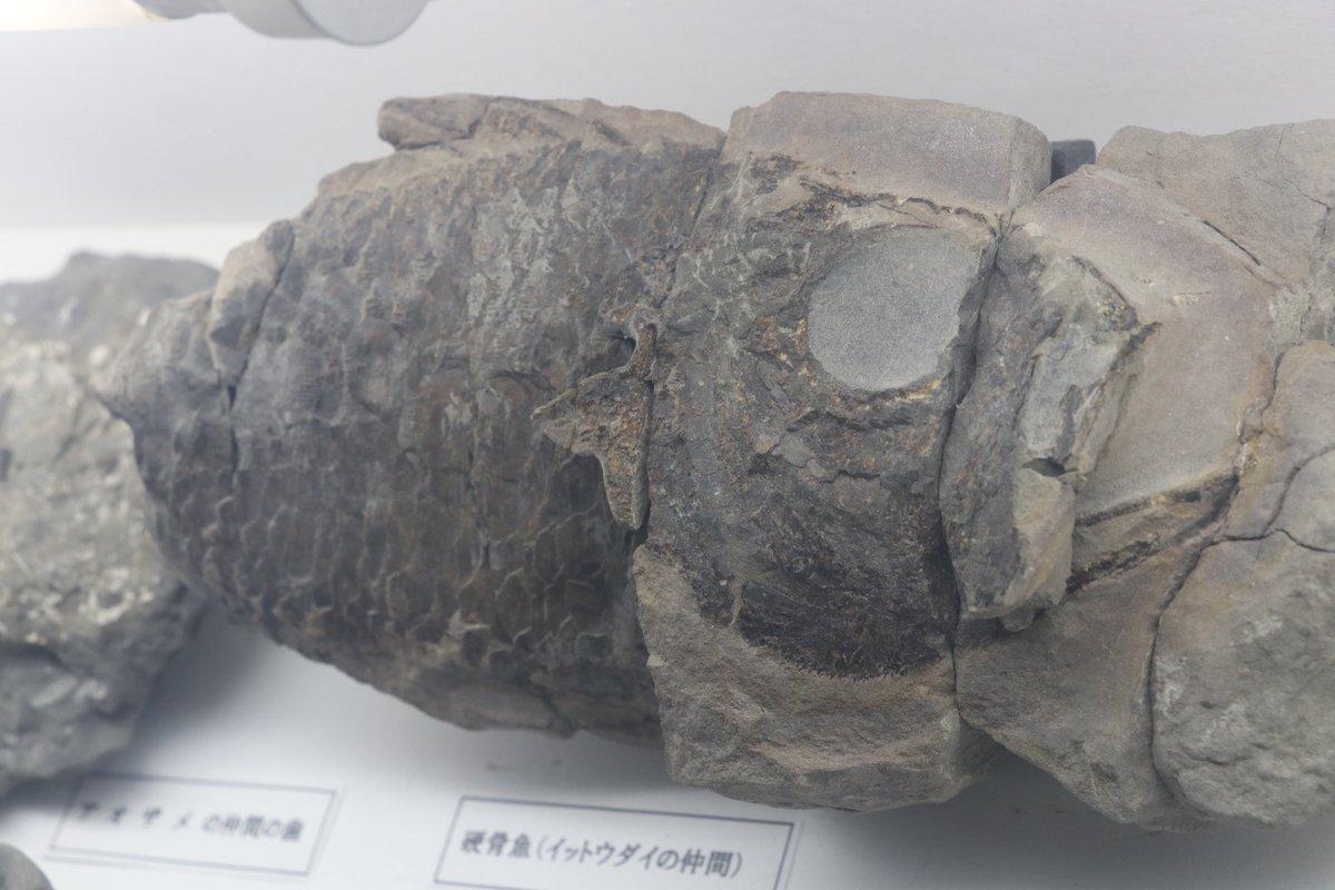 サル 化石
