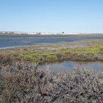 Stephans #Meeresrätsel: Wann und wie entstand Portugals größtes #Meeresschutzgebiet, die Lagunenlandschaft von #RiaFormosa?