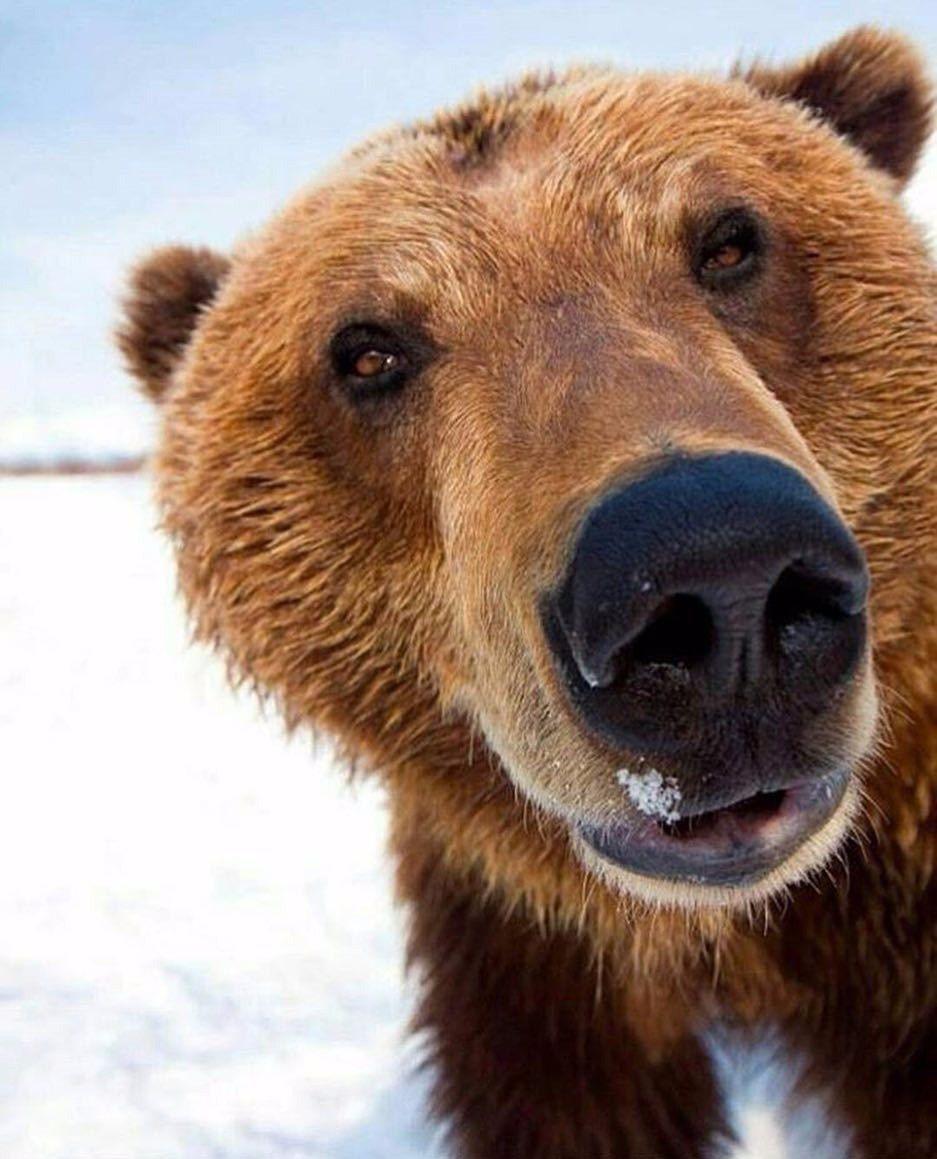 Смотреть картинки белого медведя