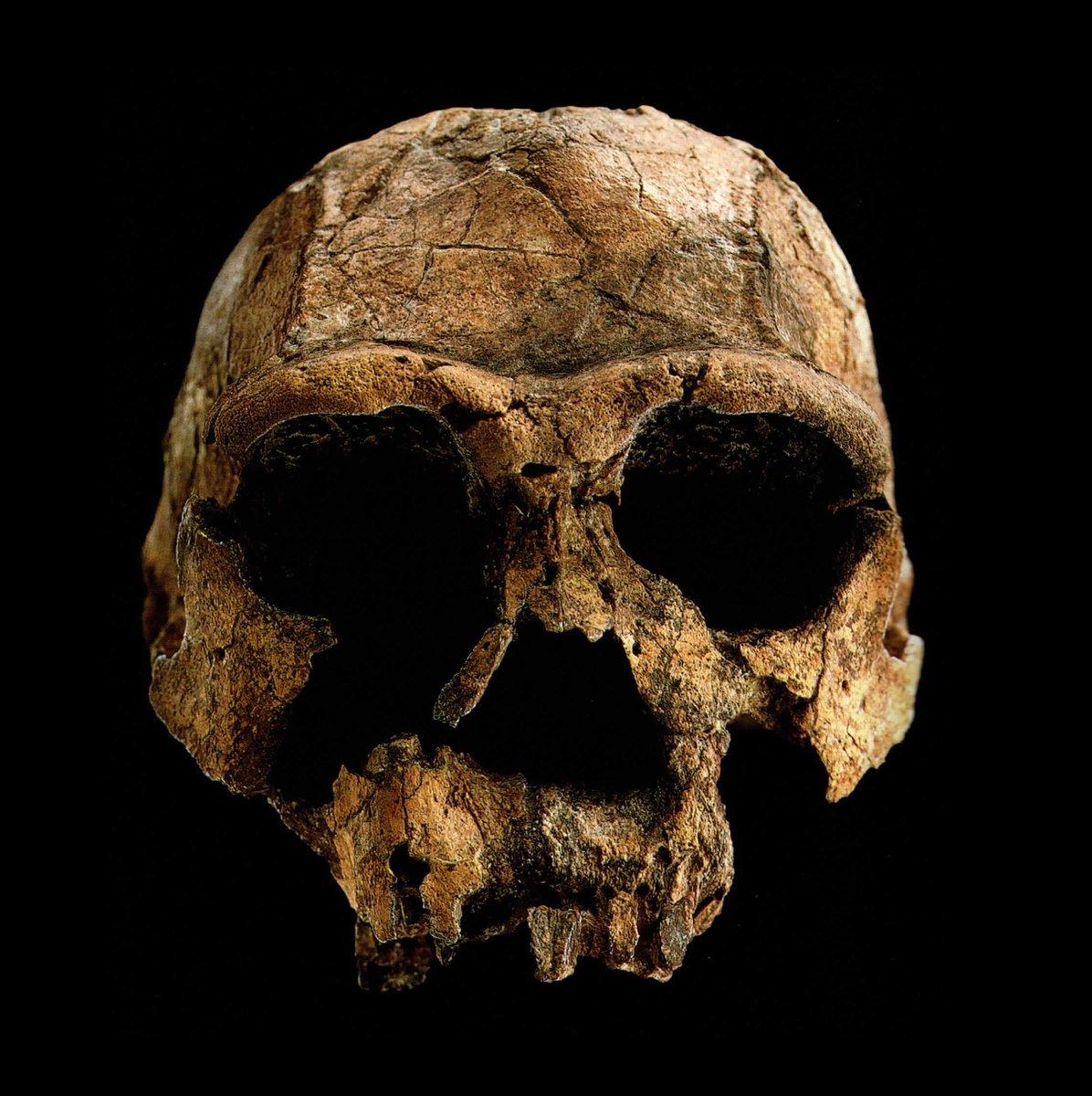 Skull 1470 datingdating skjønnhet dronning Patay