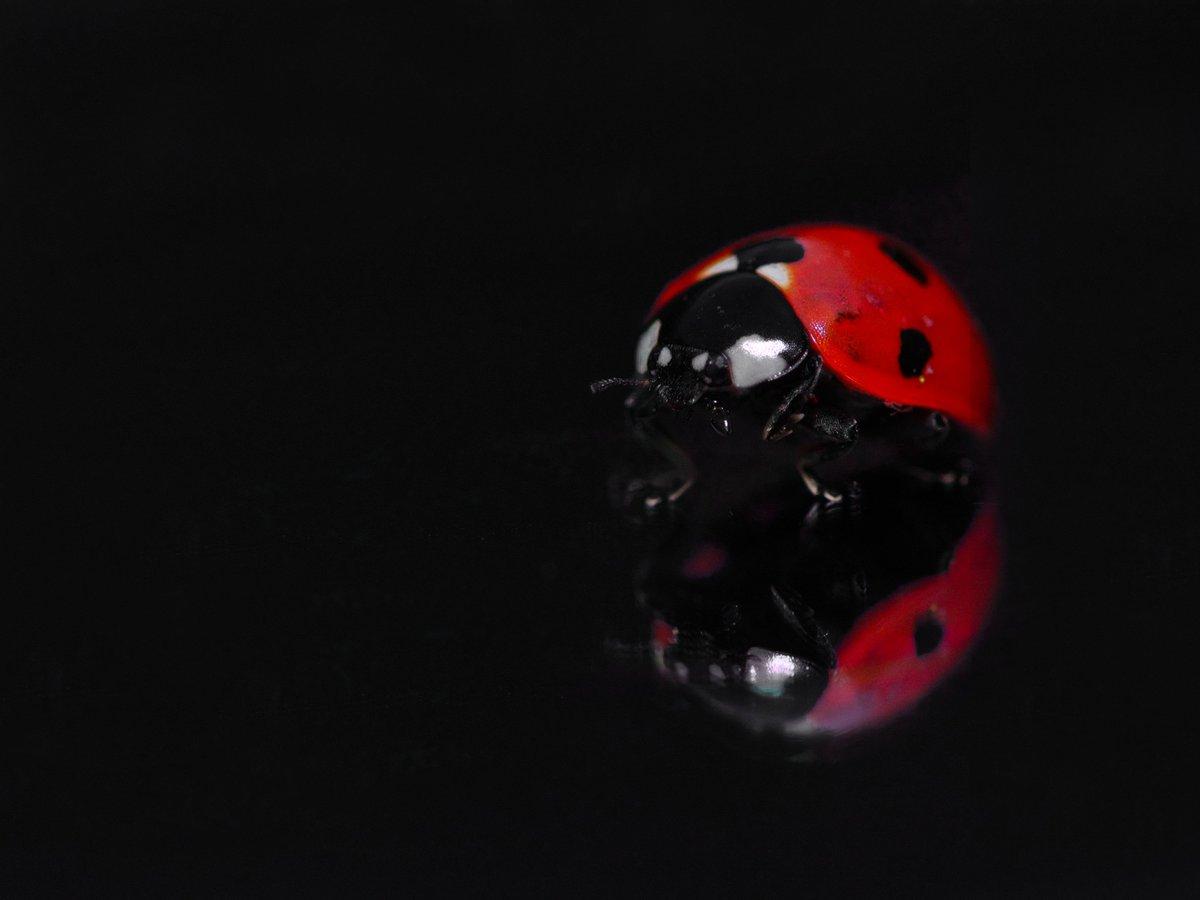 Mirror, Mirror on the floor, who's the beautiful ladybug of them all. #WexMondays #sharemondays2018 #appicoftheweek