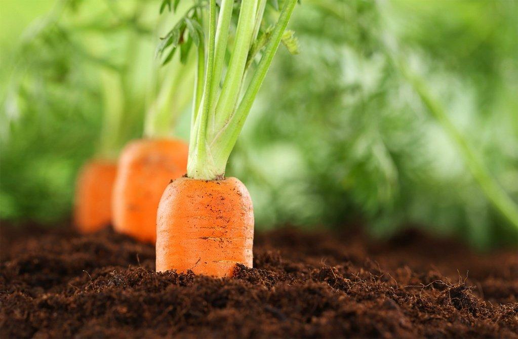 Днем, картинки растущие овощи