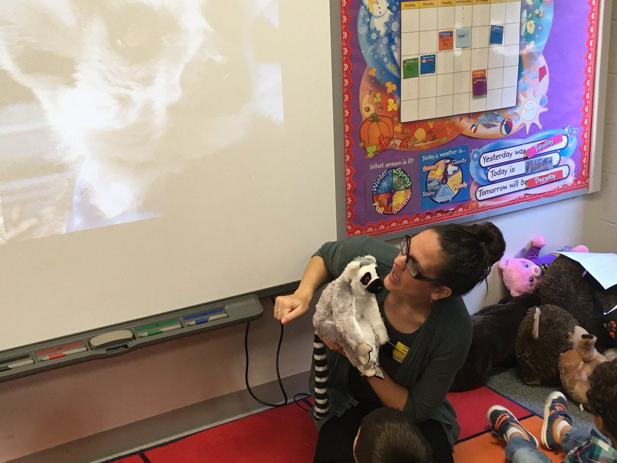 Oakridge volunteer, primatologist &amp; zoo educator Alison Zak explores Lemur hands w/ Ms. Burgin's Kindergarten class. Did you know that lemurs, humans, &amp; squirrels have similar hands?Thank you Alison Zak,we give you 2 thumbs up!<a target='_blank' href='http://twitter.com/AlmostAnthro'>@AlmostAnthro</a> <a target='_blank' href='http://search.twitter.com/search?q=APSGetInvolved'><a target='_blank' href='https://twitter.com/hashtag/APSGetInvolved?src=hash'>#APSGetInvolved</a></a> <a target='_blank' href='http://twitter.com/VPLiaison'>@VPLiaison</a> <a target='_blank' href='http://twitter.com/MrsJBurgin'>@MrsJBurgin</a> <a target='_blank' href='https://t.co/zc6pMWpiX2'>https://t.co/zc6pMWpiX2</a>