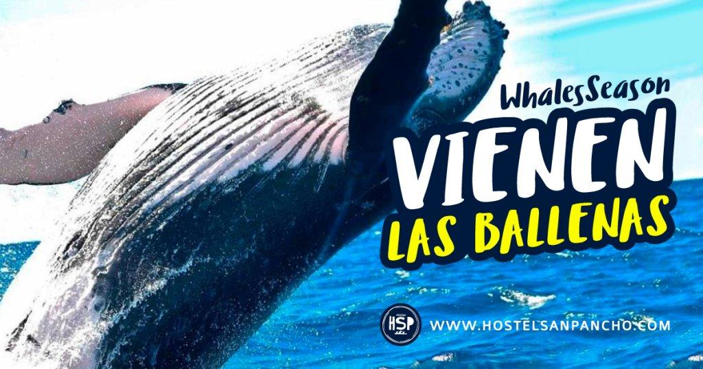Temporada de Ballenas http://hostelsanpancho.com/2018/11/05/temporada-de-ballenas-2/…