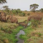 Image for the Tweet beginning: Meru National Park is a