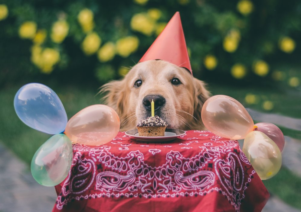 Прикольные картинки с собаками с днем рождения
