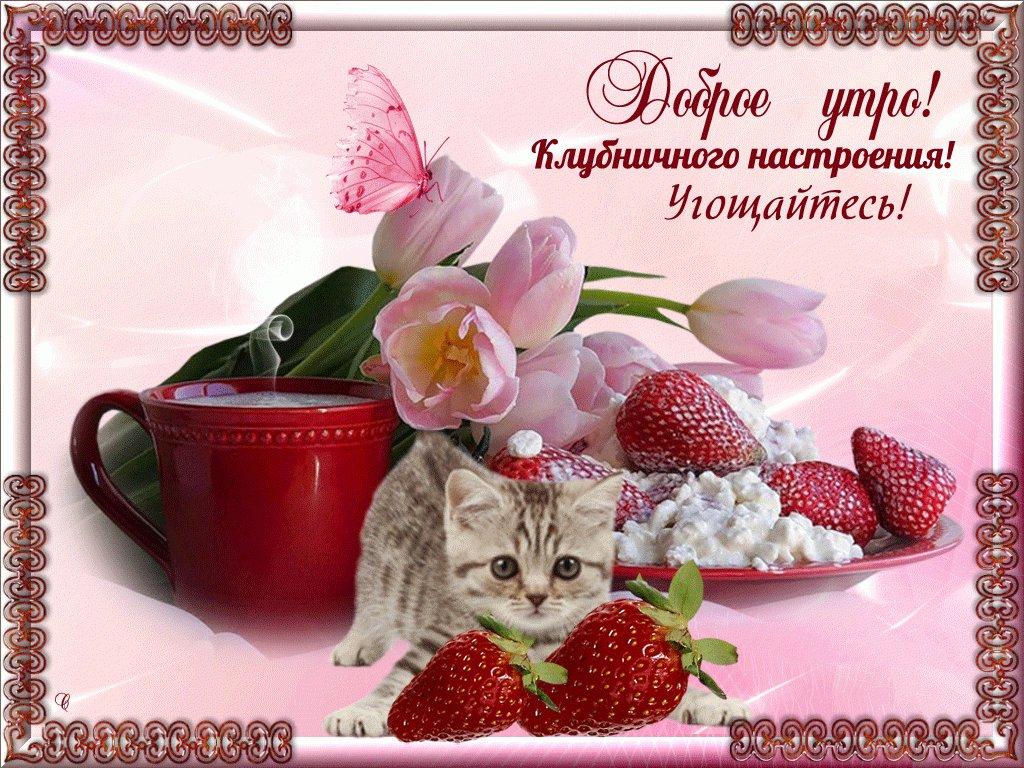 Веселая открытка для любимой с пожеланием доброго утра и хорошего дня, картинки прикол открытки