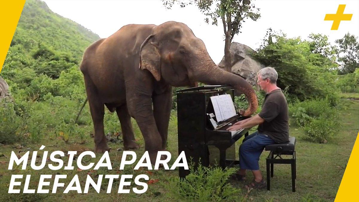Acá te va esta historia para el #DíaMundialDelElefante:Cómo un hombre descubrió que la música clásica ayuda a tranquilizar a estos gigantes 💕