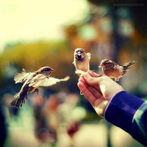 أولئك الذين يملكون قلوبًا مليئة بالمحبة، تكون أياديهم دائمة ممدودة . @RumiArb
