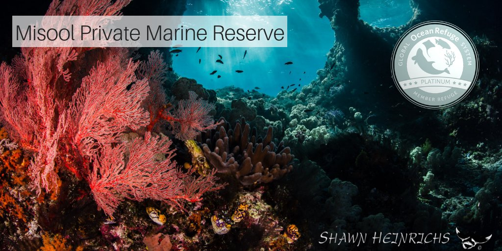 Misool Private Marine Reserve safeguards one of the richest reefs in the #CoralTriangle. Its strong protection of these vital ecosystems has earned #Misool a #GLORES Award.  Congratulations to the Misool Foundation and @misoolecoresort! http://ow.ly/Rju730mwm9Xpic.twitter.com/EVlxGdyRFn