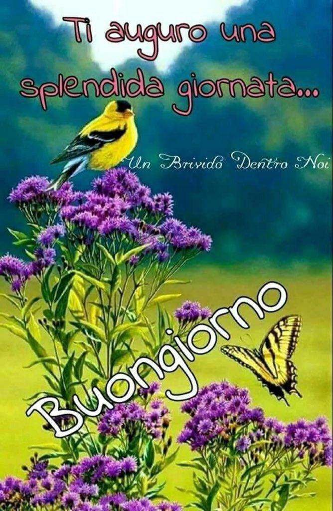 Buongiorno E Buon Mercoledì Sereno A Tutti Cè Un Po Di