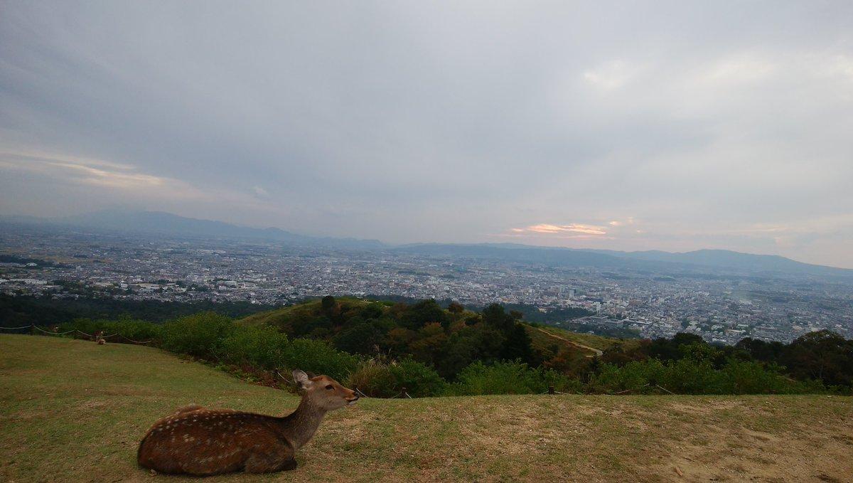 今度ライブ遠征で奈良県に行くんだけど東大寺の大仏以外に見るべきものある?