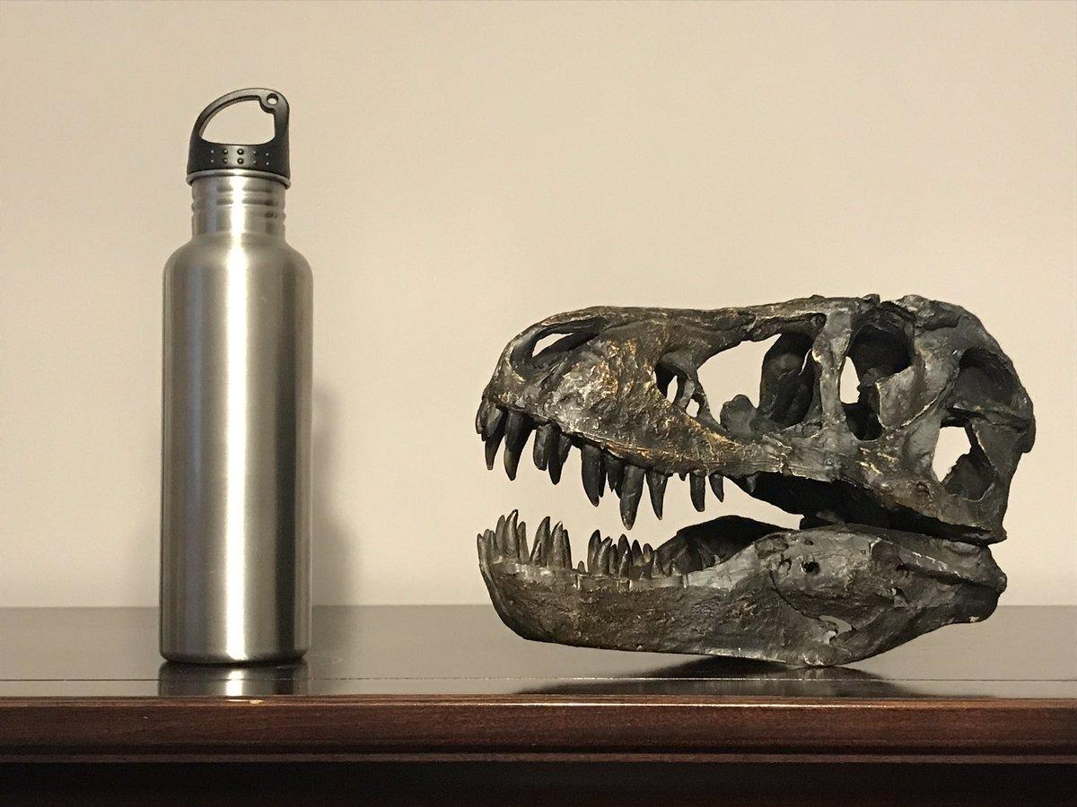 I made a fantastic purchase today. #dinosaur #trex #Tyrannosaurus <br>http://pic.twitter.com/sczBs81Sor