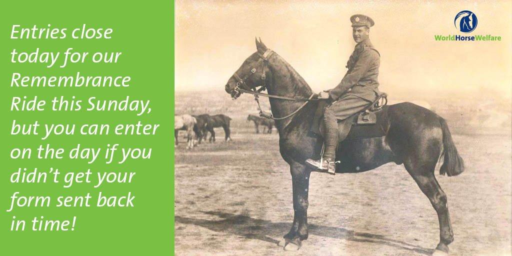 World Horse Welfare on Twitter:
