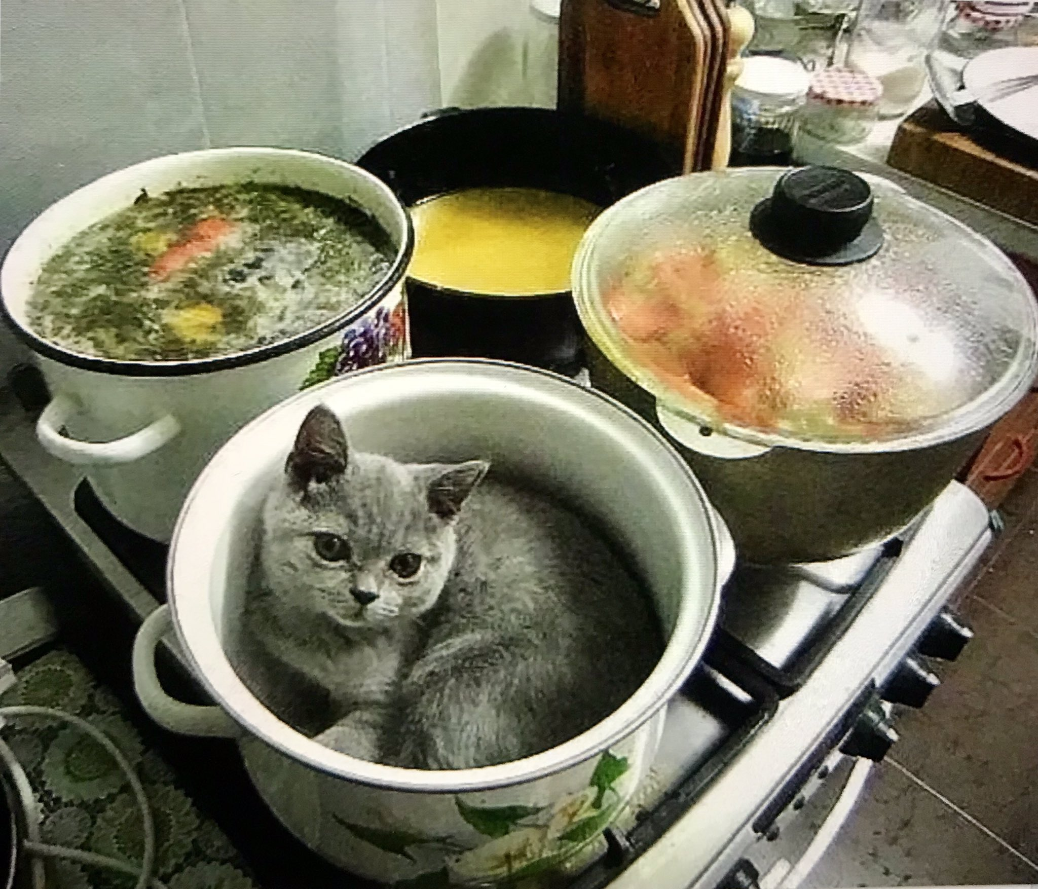 получает картинка смешная животные идет на обед знал, что вскоре