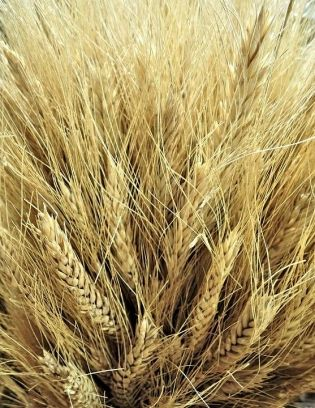 #Wheat Creeps Higher as Dollar Slips after Elections | https://t.co/0zYeEPYzqF #grain #MidtermElections2018