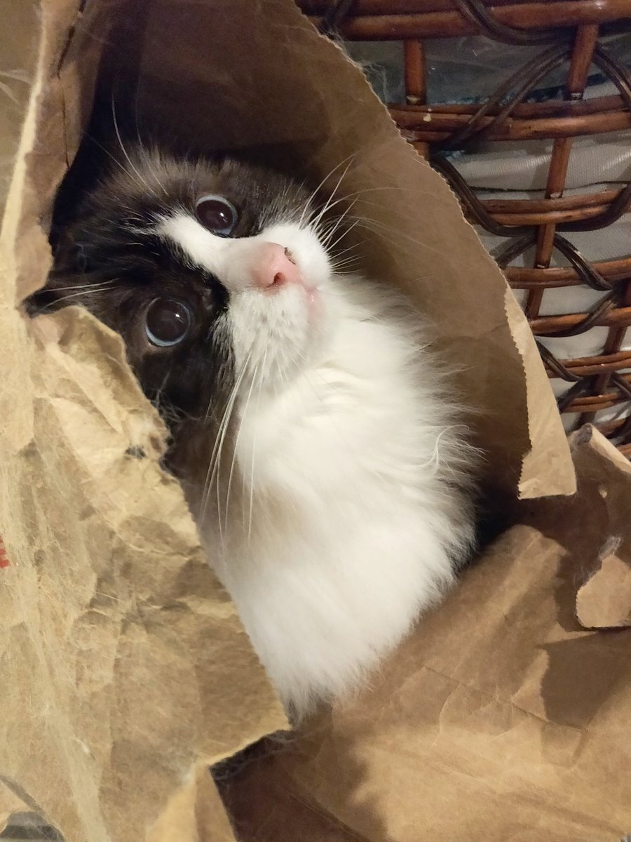 Kiki lives for paper bags... and food.