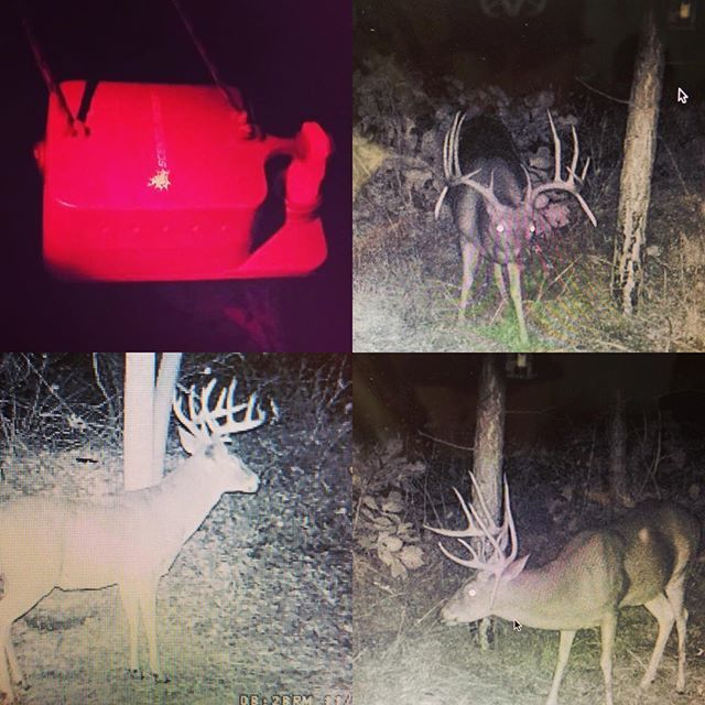 🔥Experience the ScentBlaster difference. #scentblaster #getmorescentout #attractmoregame #deerhunting #whitetail #bowhunting #bigbucks #deer #trailcam #neverstoplearning