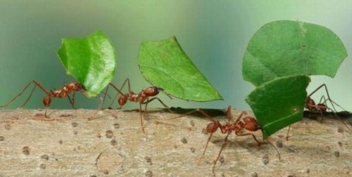 About ants 4 workers, 30% are  truly working.If you remove t