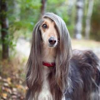 #QuintaDetremuraSDV Tem umas cachorras que são muito chiques ❤️ Foto