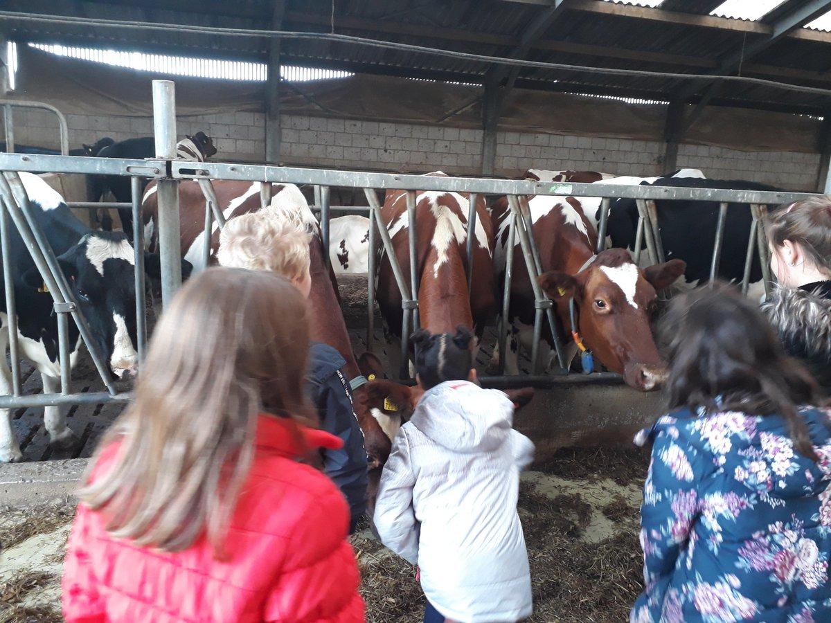 test Twitter Media - In het kader van het Nationaal @Schoolontbijt zijn we op 7 nov. met gr. 3 en 4 van @walsprong naar @IJsboerderij De Schoonheuvel #Hedel geweest. Daar hebben wij gezamenlijk ontbeten. We kregen ook een rondleiding op de boerderij. We leerden o.a. hoe melk wordt gemaakt. Genoten! https://t.co/61T6DVSlXA
