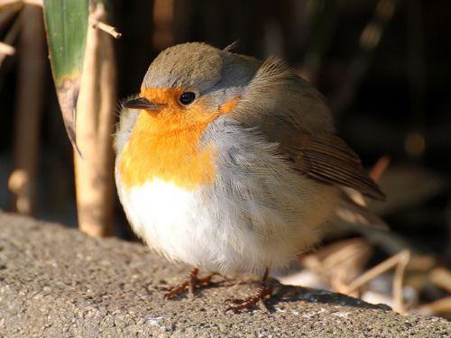 Ball or bird