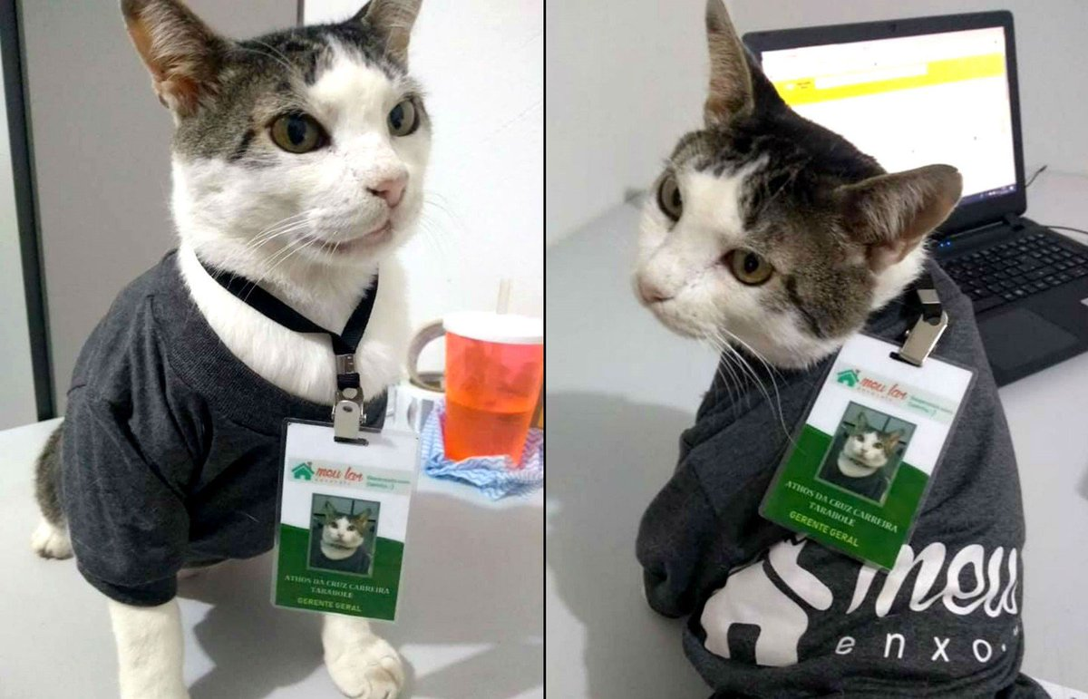 Gato 'gerente' ganha crachá e uniforme de empresa no interior de SP https://t.co/8BIo8CBAOQ #G1 #G1SP